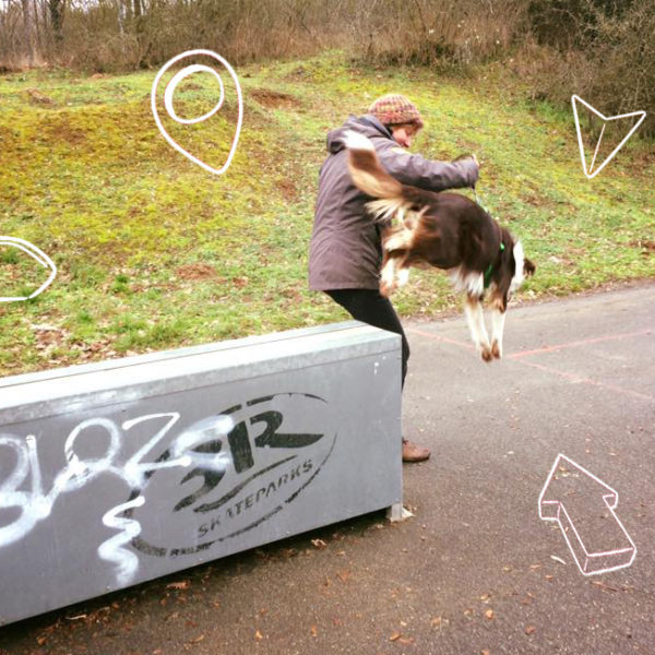DogParkour – Novice