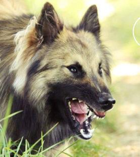 Face à l'environnement : Aider les chiens réactifs, agressifs & phobiques