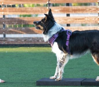 Instructeur Fitness Canin