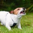 Face à l'environnement : Aider les chiens réactifs, agressifs & phobiques – Octobre 2020