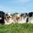 Foyer multi-chiens – Janvier 2021