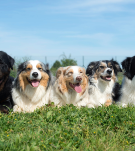 Foyer multi-chiens – Juillet 2021