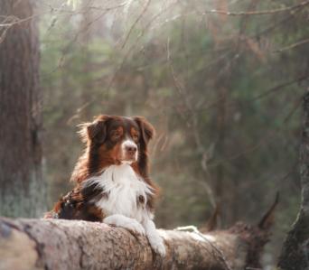 DogParkour Novice – Avril 2021