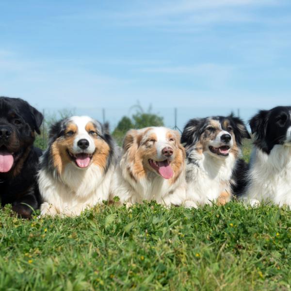Foyer multi-chiens – Juillet 2020