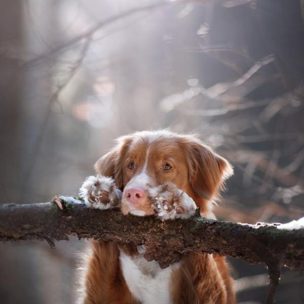 DogParkour Avancé – Septembre 2020