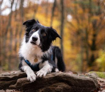 Photographier son chien  – Septembre 2021