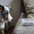 Instructeur Soins Coopératifs Animaliers – option chien – Septembre 2021