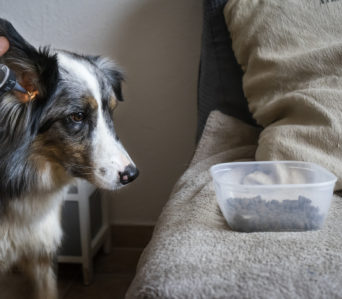Instructeur Soins Coopératifs Animaliers – option chien