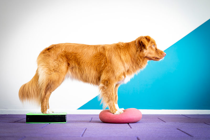 Instructeur Fitness Canin – 2021