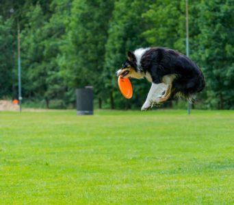 Préparation physique aux sports canins – Mars 2021