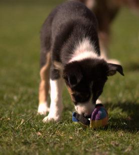 Fondations sports canins : partir de la bonne patte – Juin 2021