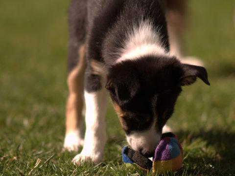 Fondations sports canins : partir de la bonne patte – Octobre 2021