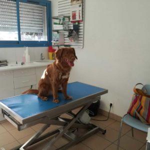 Medical Training 2