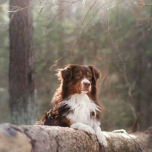 DogParkour - Novice