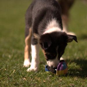 Fondations sports canins : partir de la bonne patte