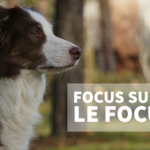 Focus sur le focus