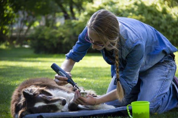 medical training iris castaing soins cooperatifs bucket game muzoplus chien couper les griffes de son chien