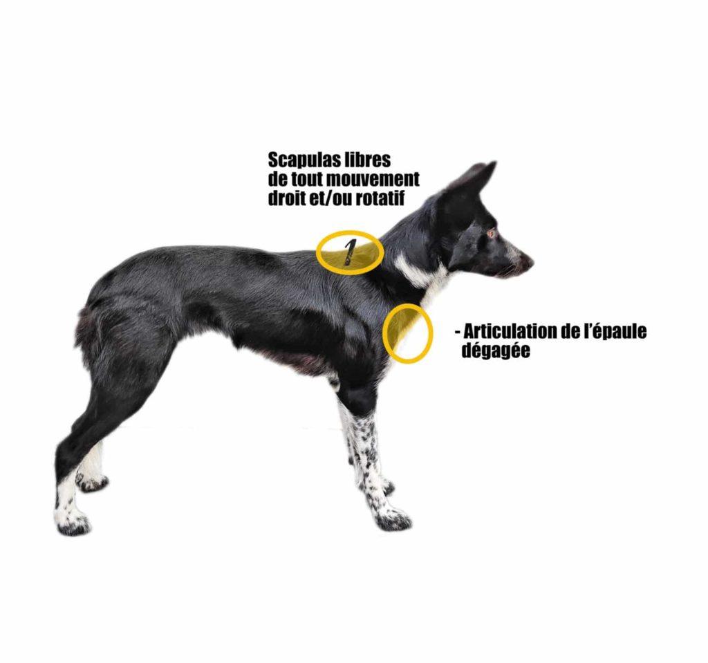 harnais visuel1 epaule chien muzo muzoplus canicross harnais