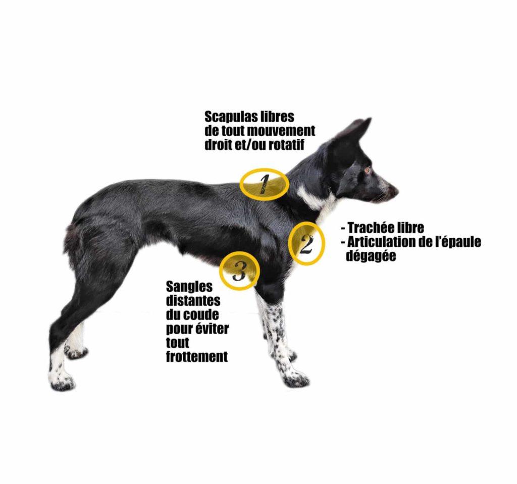harnais visuel3 coude chien muzo muzoplus canicross harnais
