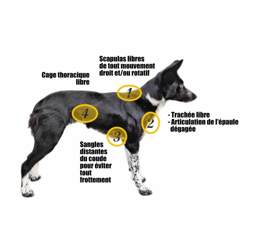 harnais visuel4 côtes chien muzo muzoplus canicross harnais