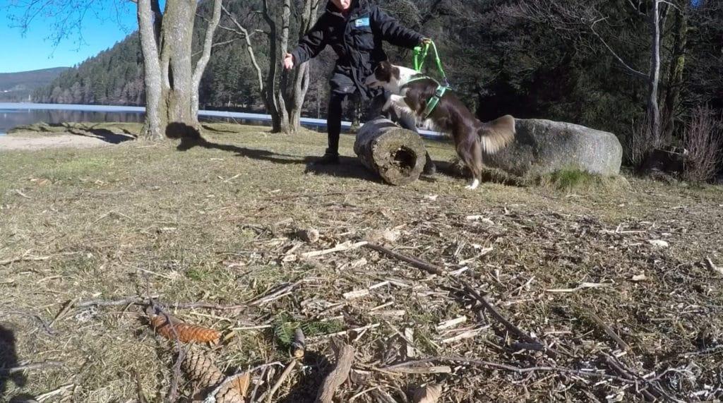 filmer dogparkour avec gopro pour analyse vidéo