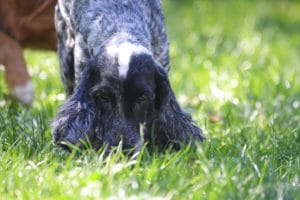 coprophagie chien muzo muzoplus wini vershueren
